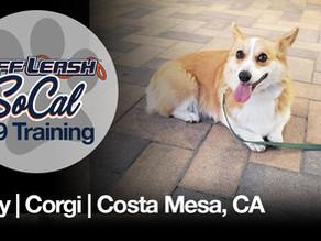 Zoey | Corgi | Costa Mesa, CA