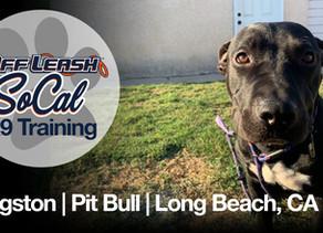 Kingston | Pit Bull Mix | Long Beach, CA