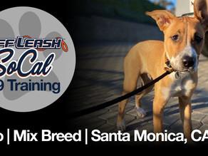Orzo | Mix Breed | Santa Monica, CA