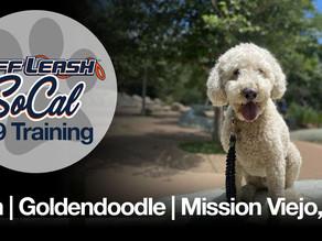 Finn | Goldendoodle | Mission Viejo, CA