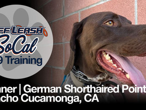 Gunner   German Shorthaired Pointer   Rancho Cucamonga, CA