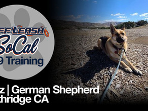 Hanz | German Shepherd | Northridge CA