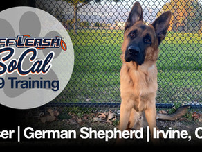 Kaiser   German Shepherd   Irvine, CA