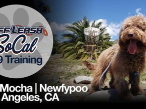 Isis Mocha   Newfypoo   Los Angeles, CA