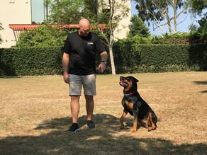 King| Rottweiler | Inglewood, CA