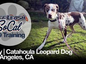 Mary   Catahoula Leopard Dog   Los Angeles, CA