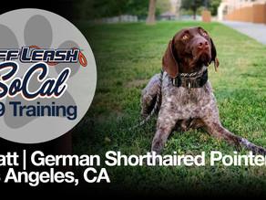 Wyatt | German Shorthaired pointer | Los Angeles, CA