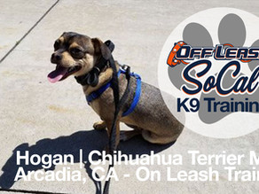 Hogan | Terrier Mix | Arcadia, CA