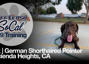 Rex | German Shorthaired Pointer | Hacienda Heights, CA
