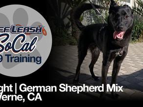 Knight | German Shepherd Mix | La Verne, CA