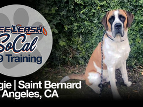 Biggie | Saint Bernard | Los Angeles, CA