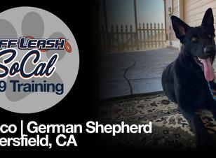 Rocco   German Shepherd   Bakersfield, CA