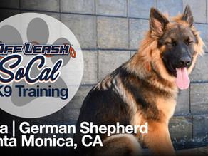 Naia | German Shepherd | Santa Monica, CA