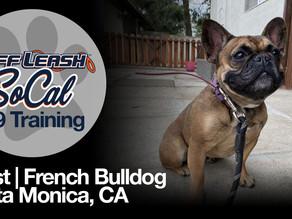 Toast   French Bulldog   Santa Monica, CA