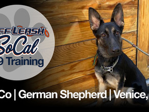 Co-Co | German Shepherd | Venice, CA
