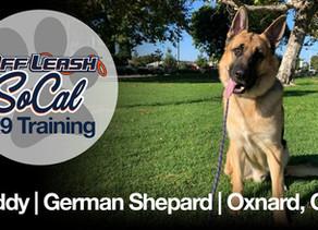 Buddy | German Shepard | Oxnard, CA