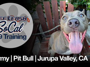 Stormy | Pit Bull | Jurupa Valley, CA