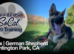 Max | German Shepherd | Huntington Park, CA