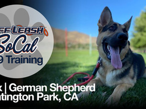 Max | German Shepherd | Huntington Park, CA