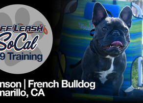Bronson | French Bulldog | Camarillo, CA