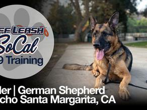 Kesler | German Shepherd | Rancho Santa Margarita, CA