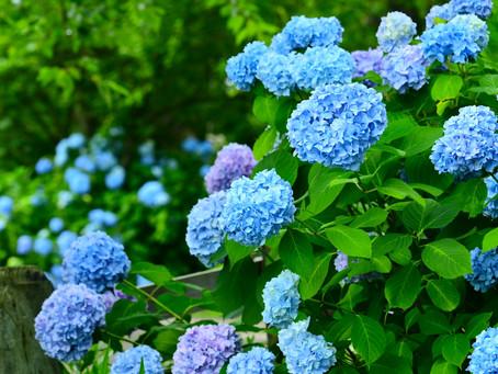 Summer Rain: The Rainy Season in Japan