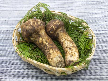 The Mythical Matsutake Mushroom