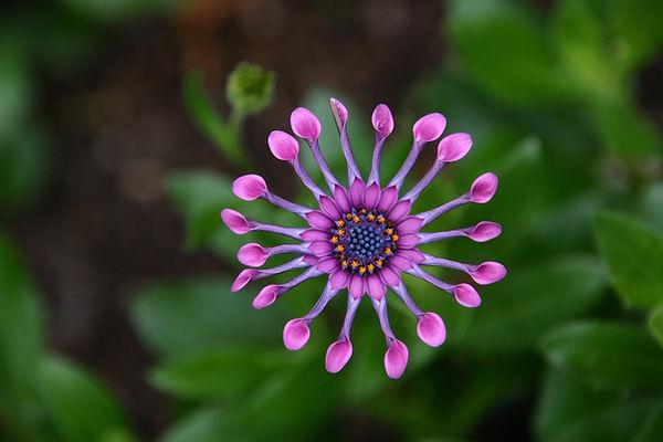flower-651902_1920.jpg