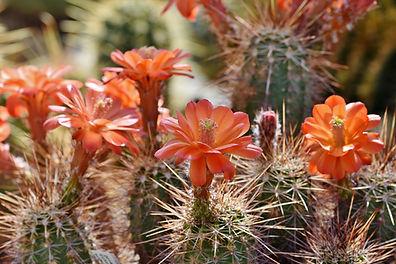 cactus-4176104_1920.jpg