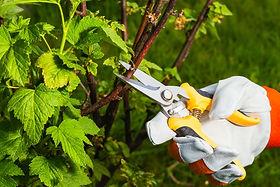 pruning.jpeg