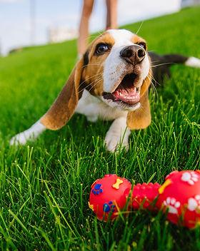 Dog with toy.jpeg