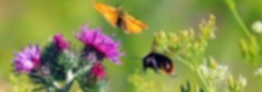 meadow-1532004_1920.jpg