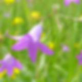 flower-1264823_1920.jpg