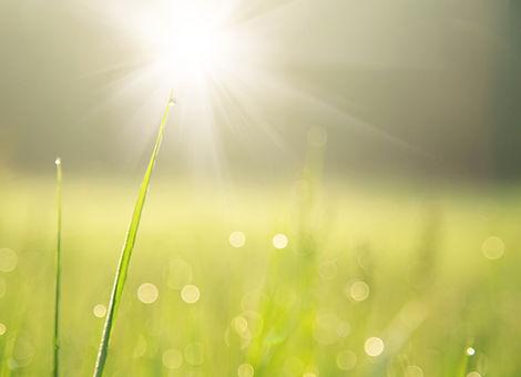 Острие травы