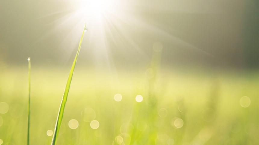 Green wet grass with sunlight.