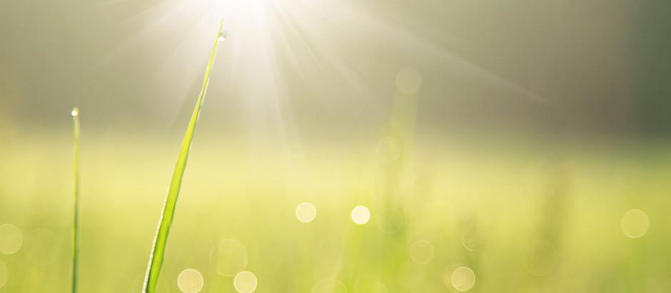 Pieds dans l'herbe et brise légère - 30min