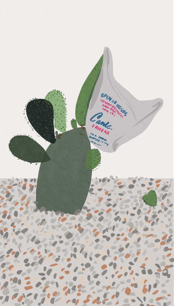 Cactus a LA (da una foto di Olimpia Zagnoli)