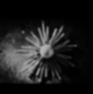 Screen Shot 2018-06-21 at 00.33.43.png