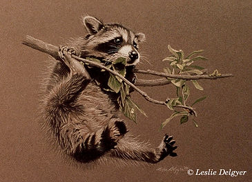 LD-GALLERY-RACCOON.jpg