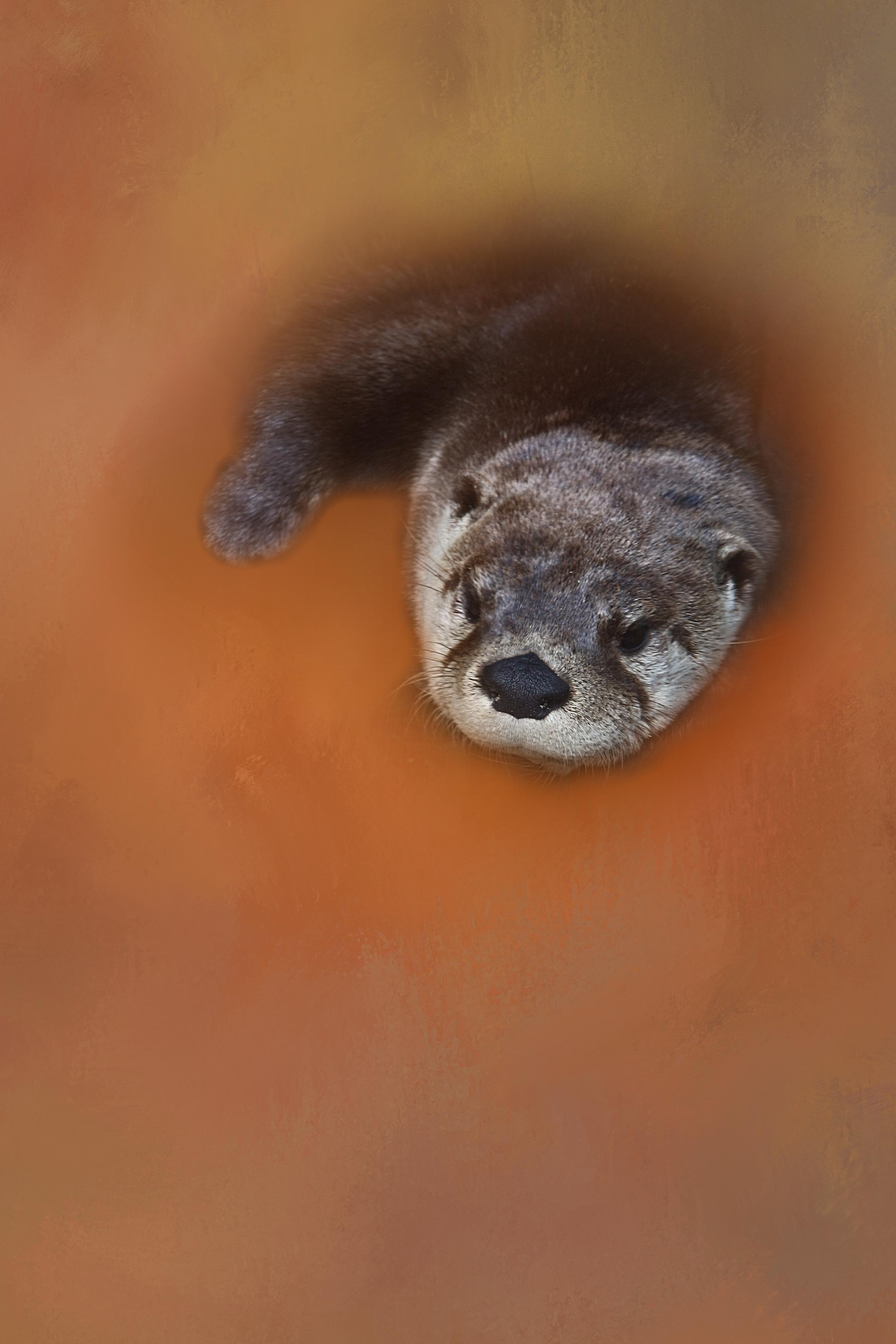 Otterly Lazing