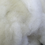 "Thumbnail: Border Leicester wool roving, ""Daphne"""