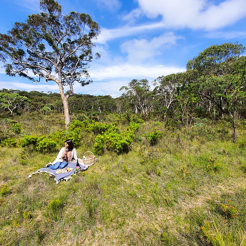 Picnic in the Blue Mountains.jpg