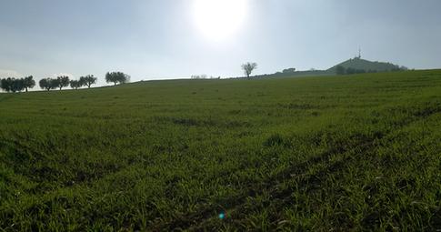 semina grano 2017 SelvaGiurata