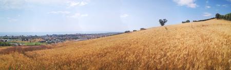 panorama-grano-Selvagiurata.png