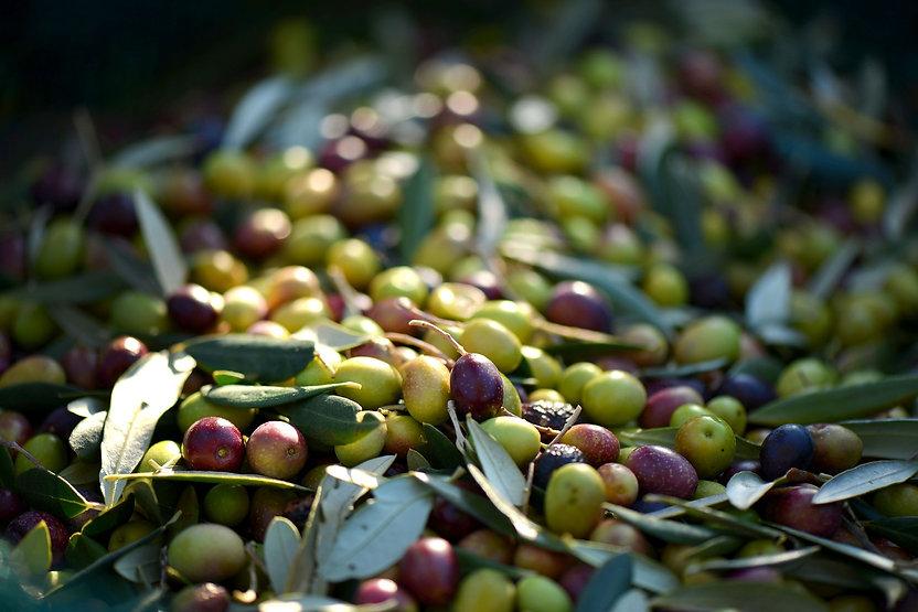 olives-253264_1920.jpg