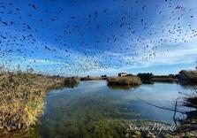 riserva-naturale-sentina-migrazione.png