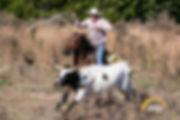 cowboy way booger steer.jpg