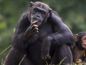What We Can Learn from the Animals About Change