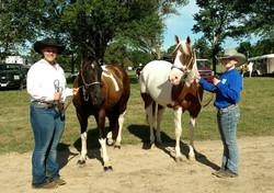 Sunday Open Horse Show