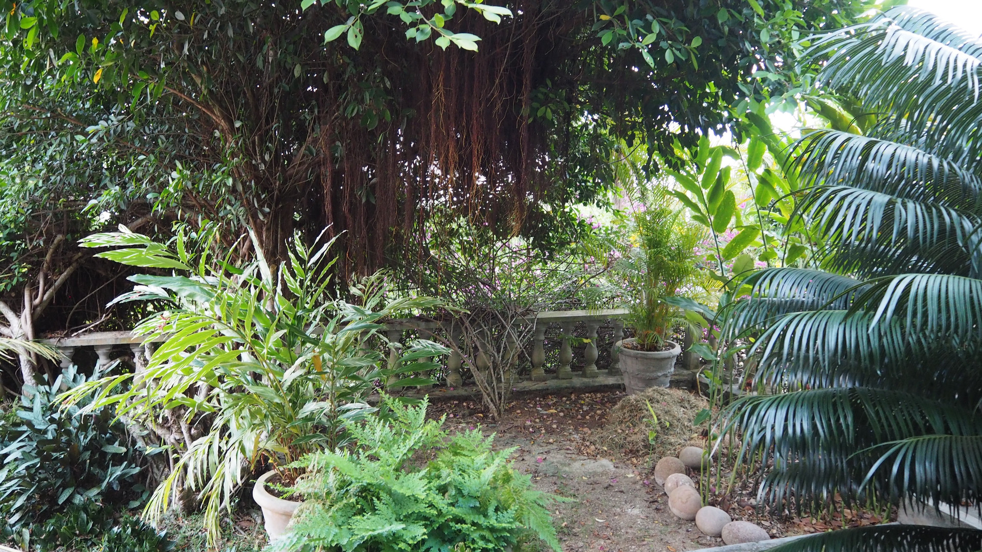 View from lower terrace over looking private driveway and into tropical garden